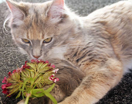 kitten playing with flowers photo