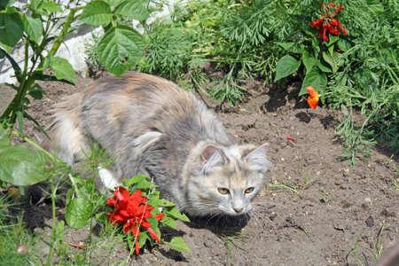 stalking kitten  photo