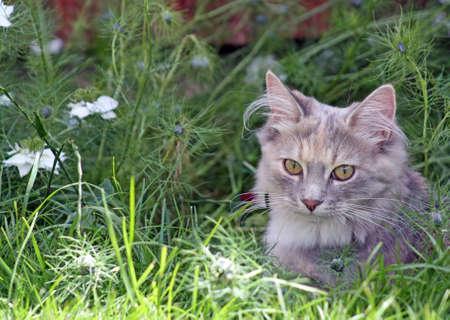 kitten in the garden  photo