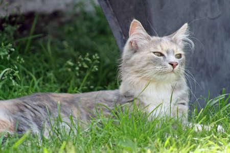 kitten in garden  photo