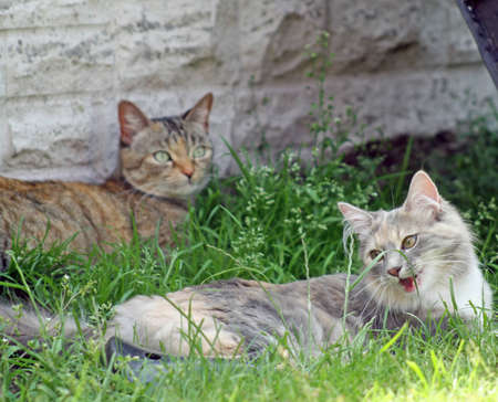 tabby cats in the garden photo