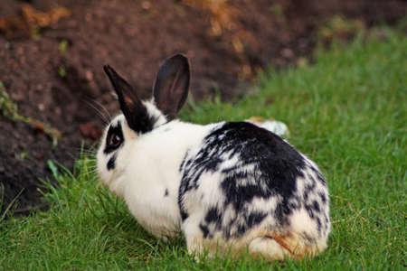 rabbit in garden  photo
