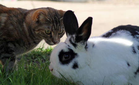 cat and rabbit meet in the garden  photo