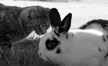 cat and rabbit meeting photo