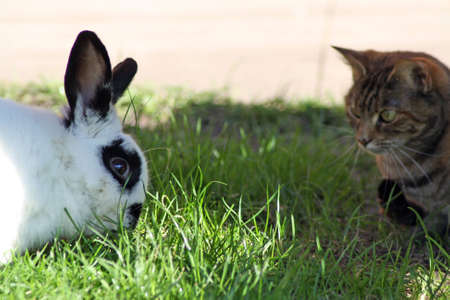 cat and rabbit together in the garden  photo