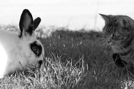 cat and rabbit meeting in the garden photo