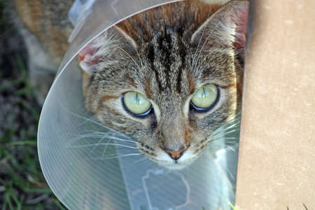 sick cat wearing a cone photo