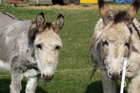 donkeys  photo