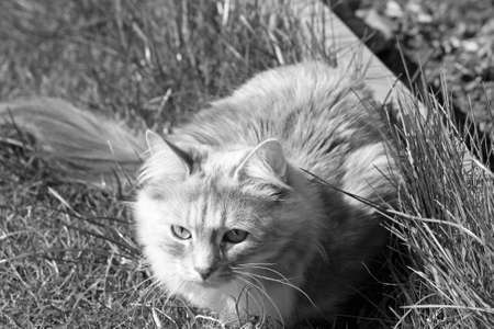 cat in the garden  photo
