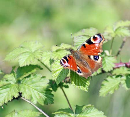 stunning: stunning butterfly Stock Photo
