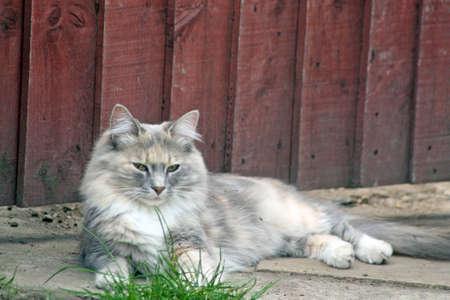 gray tabby cat photo