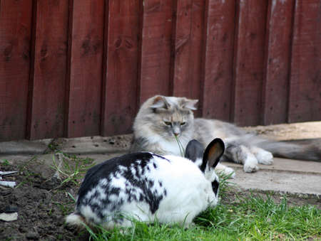 cat and rabbit  photo