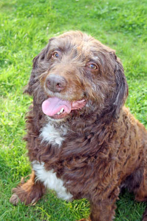 happy dog Stock Photo - 13841192