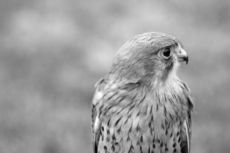 bird of prey photo