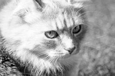 stunning tabby cat in the garden Stock Photo - 14487340