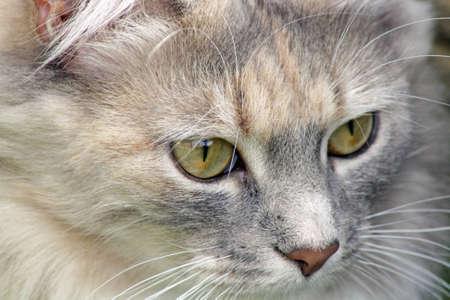 stunning tabby cat in the garden photo