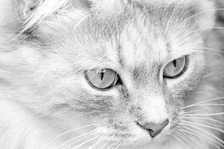 stunning tabby cat photo