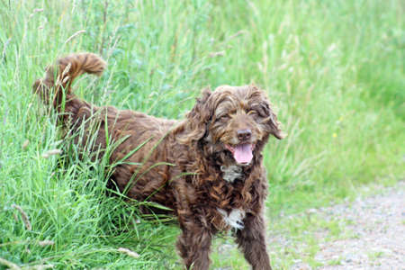 scruffy brown pet dog in the park photo