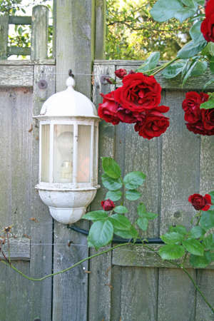 garden light photo