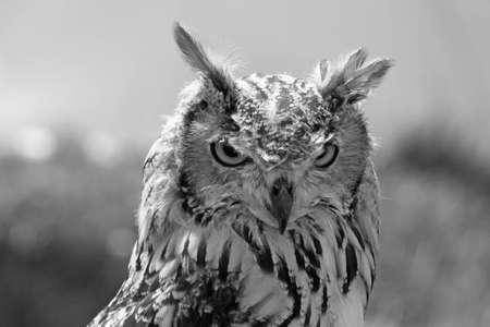 stunning bird of prey photo
