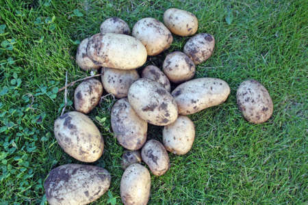grown: home grown potatoes