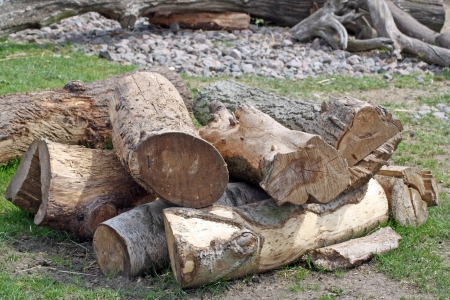 pile of logs Stock Photo - 20950332