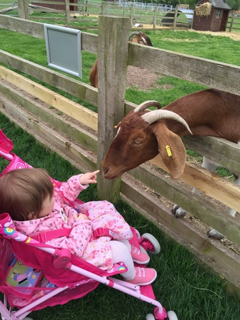 fence: Baby and goat Stock Photo