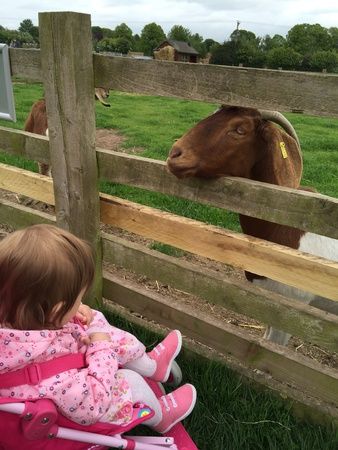 fence: Baby meets goat