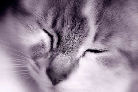 A close up of a happy kitten's face. Black and white toned soft focus photo