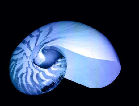 Beautiful blue nautilus sea shell laying on the black background  photo