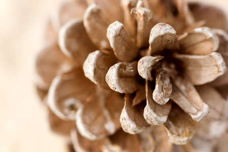 gall: Close up of a gall on white background , shallow DOF photo Stock Photo