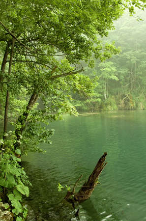 Beautiful landscape of a green lake on a foggy day  Stock Photo - 3913746