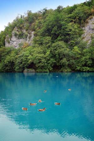 Beautiful landscape of a green lake Stock Photo - 4629796