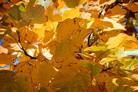 seasoned: Colorful leaves on a tree , nice autumn background Stock Photo