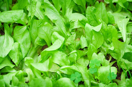 Green seedlings in the garden photo