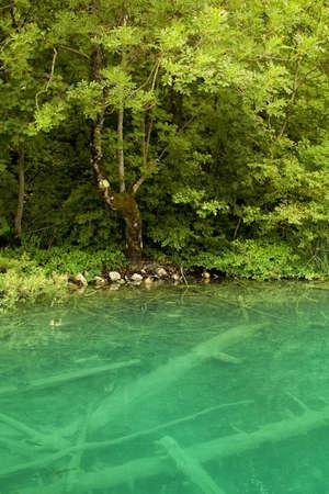 Beautiful landscape of a green lake Stock Photo - 7479750