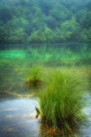 quiet scenery: Landscape of a beautiful lake on a foggy day , beautiful nature background