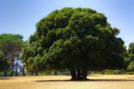 초원에 아름다운 떡갈 나무