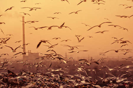 Apocalyptic background with birds chimney... retro style toned photo Stock Photo - 18744451