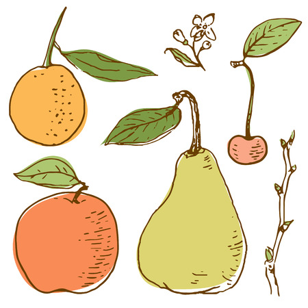 Fruits retro vector drawing of apple pear cherry and orange