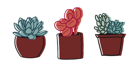 succulent: Three succulent potted plants illustration