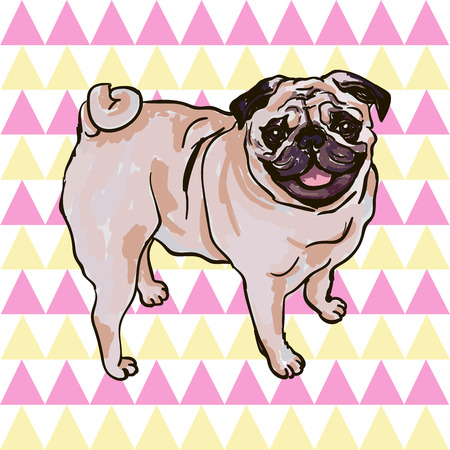 breed: Illustration of the dog breed Pug