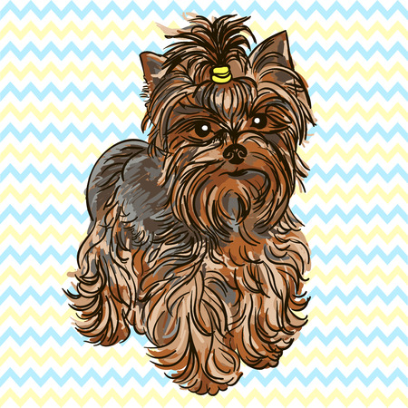 yorkshire terrier: Illustration of the dog breed Yorkshire Terrier