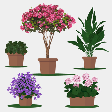 beautification: Vector flat illustration of plants in pots.