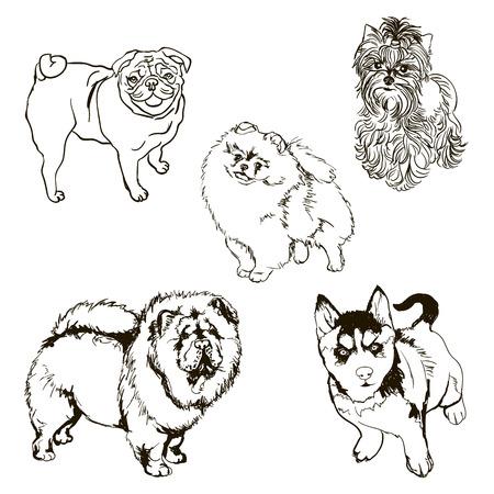 yorkshire: Set of pet dog. Black and white. Illustration