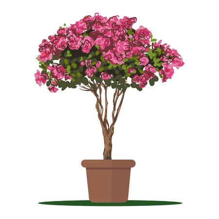 beautification: illustration plant in pot, Blooming tree Azalea.