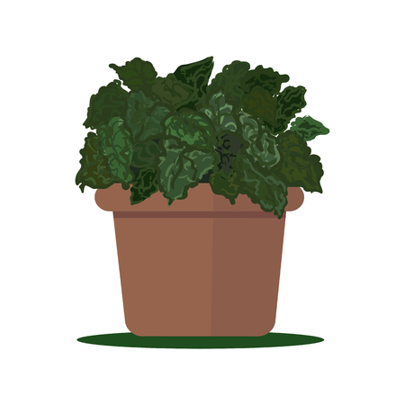 plant pot: illustration plant in pot.