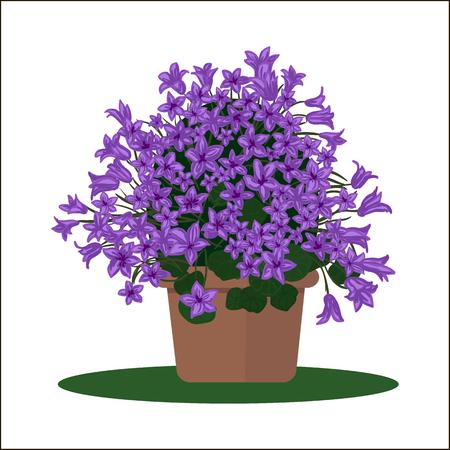 beautification: illustration plant in pot. Blooming flower. Bellflower