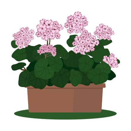 illustration plant in pot. Blooming geranium Vectores