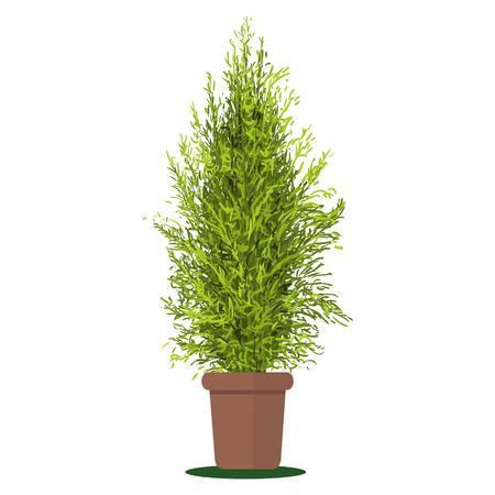 plant pot: illustration plant in pot.